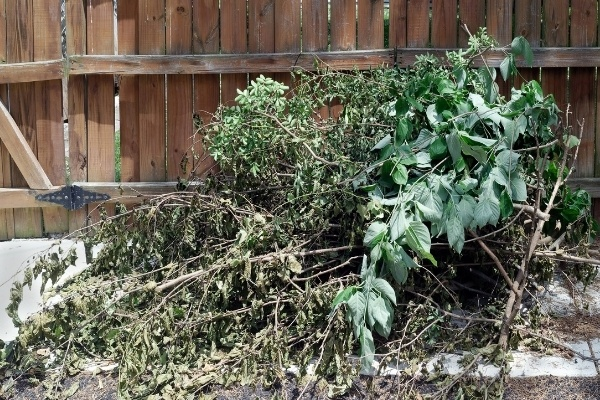 A pile of branches from a pruned tree that need to be disposed of.