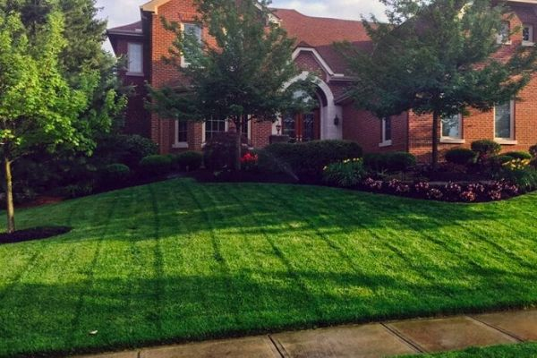 Riding mower lines in a freshly cut sloping front yard